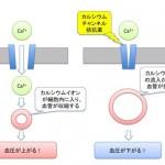 カルシウム拮抗薬(Ca拮抗薬)の違いと使い分けをわかりやすく解説!